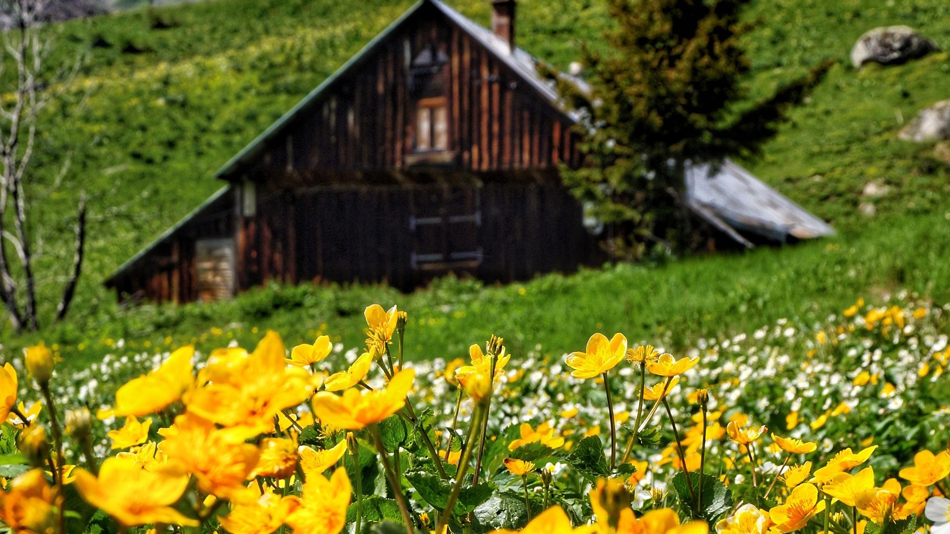 Chalet dans les fleurs