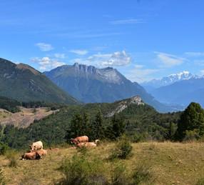 Sentier des Buis - Montmélian