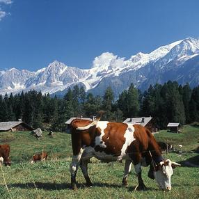 Charousse mountain pasture