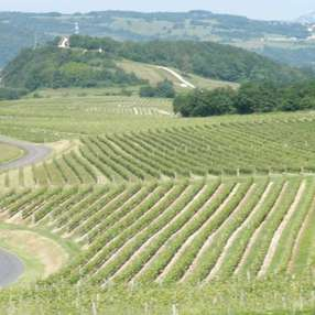 Vignoble de Jongieux image