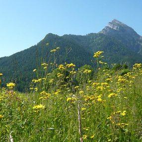 Parc Naturel Régional de la Chartreuse