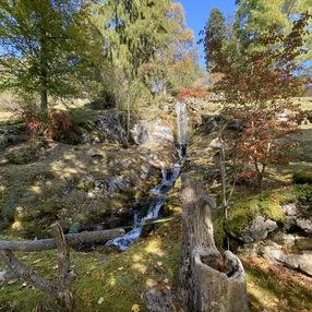 Alpine Botanical Garden la Jaÿsinia