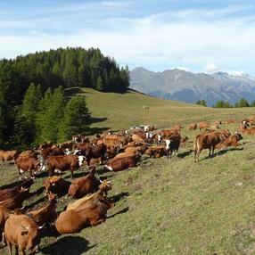 L'alpage de Plan-Pichu :  Visite guidée