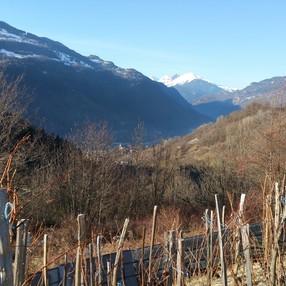 Sentier des Vignes