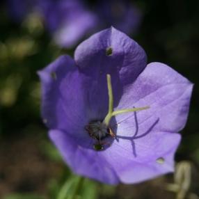 12èmes journées botaniques : Exposition de macrophotographie dans le Jardin Botanique