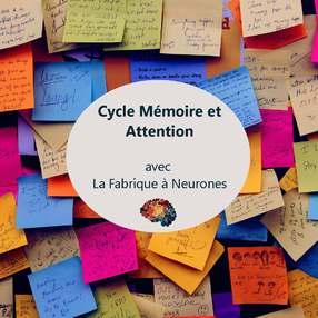 Cycle mémoire et attention