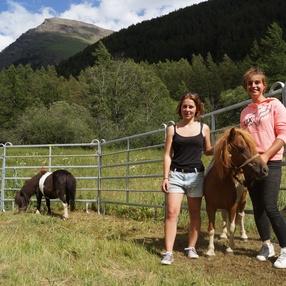 Balades en poney et chevaux
