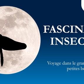 Diaporama - Fascinants insectes