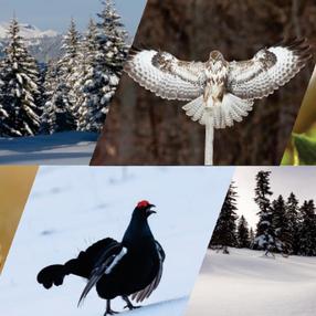 Diaporama Oiseaux de montagne