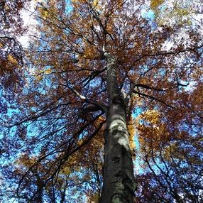 Découverte de la sylvothérapie : connexion à la forêt