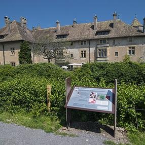 Sentier découverte du château et du vignoble de Ripaille