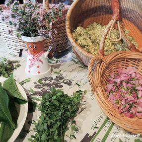 Journée cueillette et cuisine des plantes