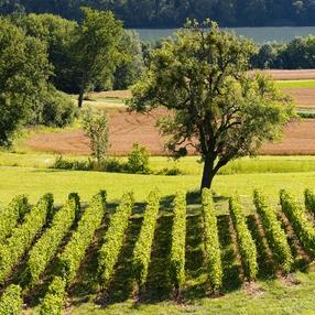 Randonnée VAE : Terroir et vignobles de Seyssel image