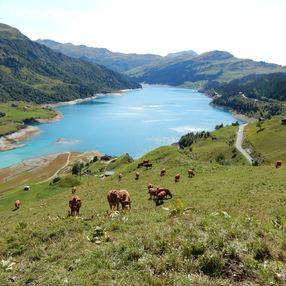 Instants Beaufort : Alpage Les Moillettes