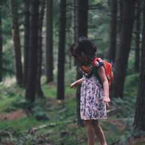 Repor'terre de la forêt