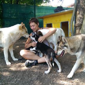100% chiens de traîneaux : cani-kart et visite de chenil