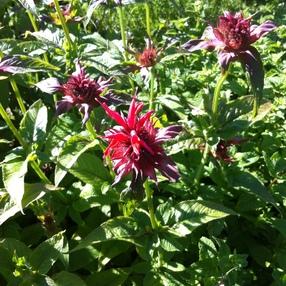 Balade découverte des plantes comestibles et médicinales au Vallon de Tamié