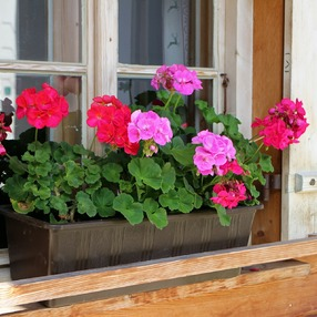 12ème Journées Botaniques : Atelier de réalisation de jardinières fleuries