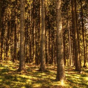 12èmes Journées Botaniques - discussions sur les forêts avec Sébastien DUFOUR de l'Office National de la Forêt