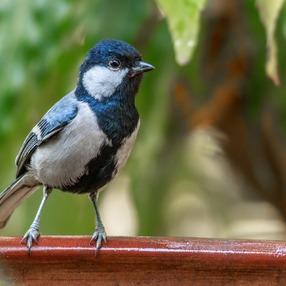 12èmes Journées Botaniques - balade à la découverte des oiseaux du Jardin Botanique