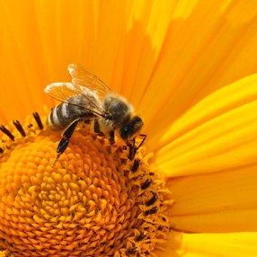 12ème Journées Botaniques : Atelier de fabrication d'abeille