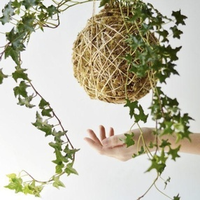 Atelier d'art végétal : le kokedama japonais