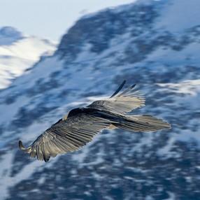 Projection Vivre en montagne : s'adapter ou disparaître