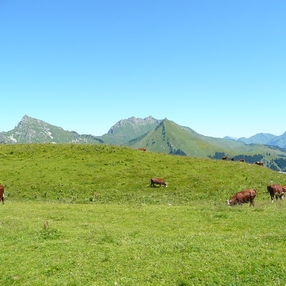 Fête de la Montée en Alpage