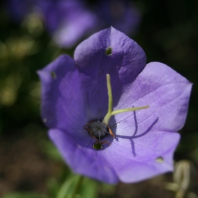12èmes Journées Botaniques : Exposition de macrophotographie