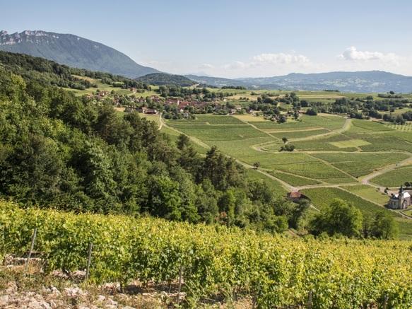 Vignoble de Jongieux par Henri de Caevel
