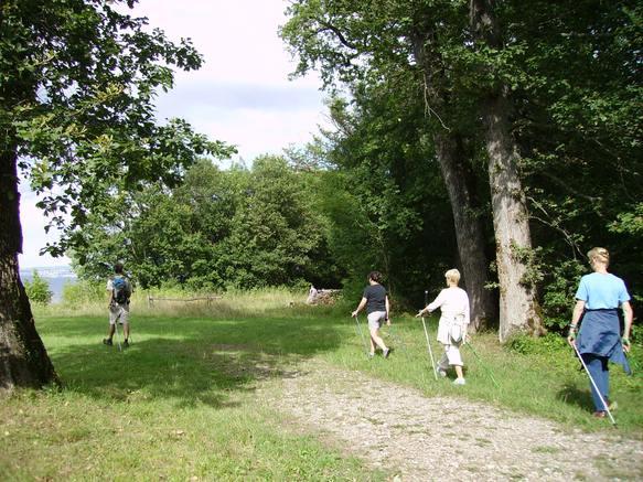 Marche dans la forêt de Ripaille