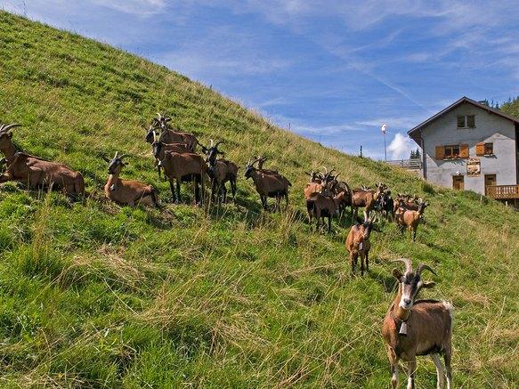 Alpage de tr chauff savoie mont blanc savoie et haute - Office du tourisme saint jean d aulps ...