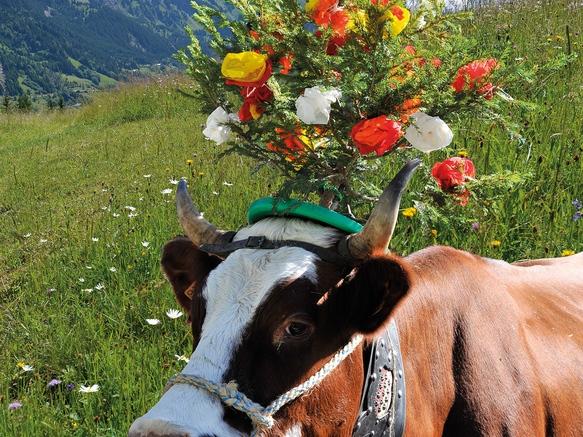 Vache Abondance