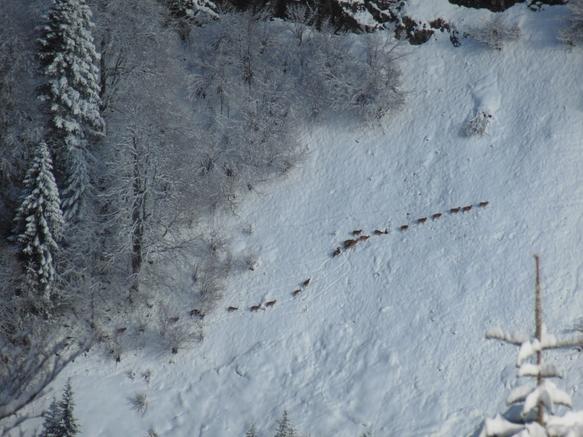 Sortie Chamois Ski Academy