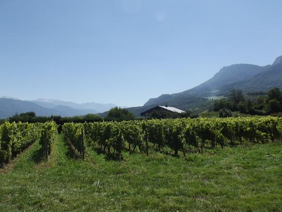 Vignobles Saint André
