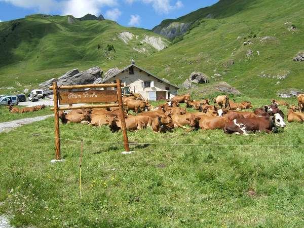 Sentier du Plateau de Plan Pichu image