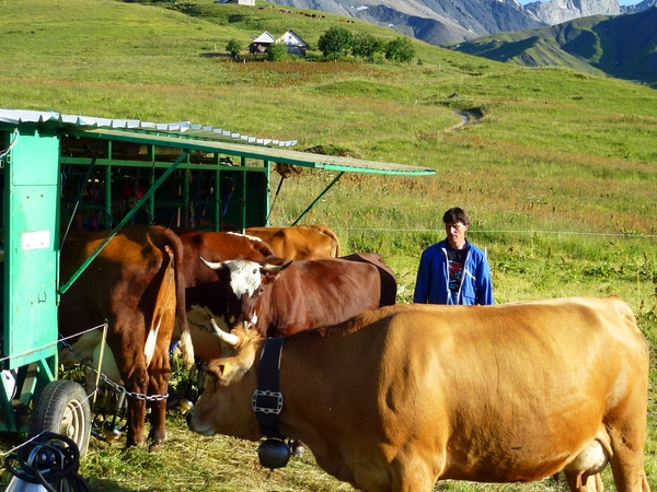 Visite de l'alpage des Aiguilles d'Arves lors de la traite des vaches image