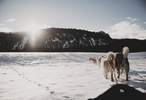 Baptème de chiens de traîneau