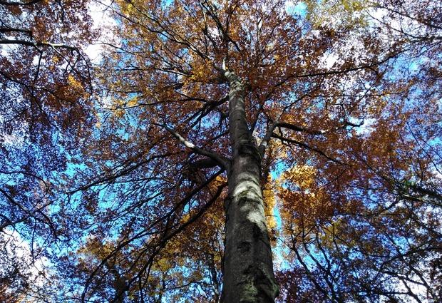 Connexion à la forêt et méditation guidée