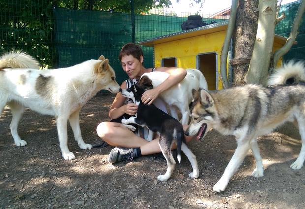 100% chiens de traîneaux (cani-kart et visite de chenil)