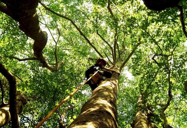 Découverte de l'arbre par la grimpe