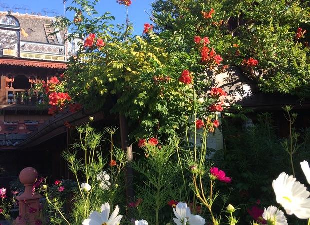 Fleurs à l'assaut des toitures