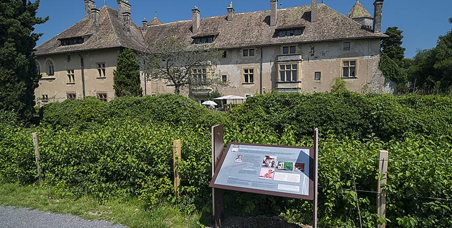 Ripaille et ses vignobles (Thonon-les-Bains)