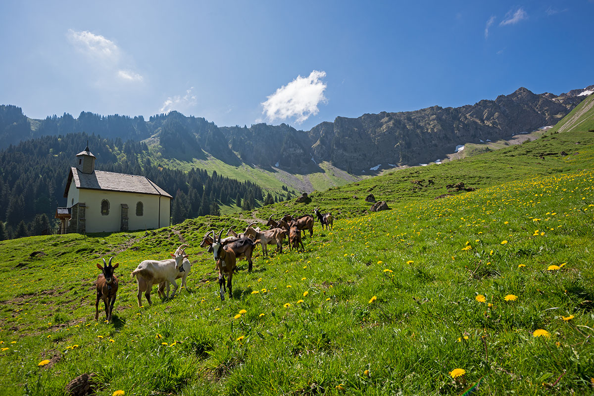 Combe et alpage de graydon savoie mont blanc savoie et - Office du tourisme saint jean d aulps ...