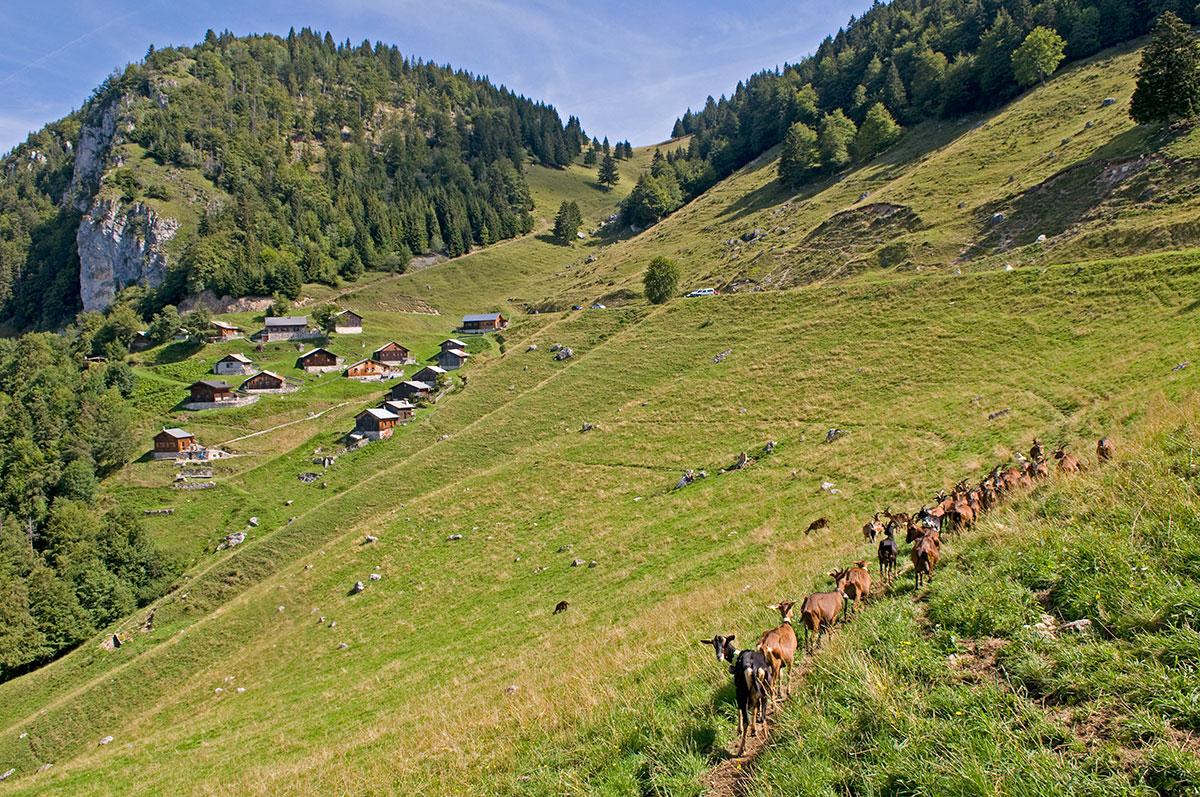 Alpage de tr chauff savoie mont blanc savoie et haute - Saint jean d aulps office du tourisme ...